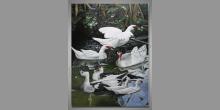 Divé husi na jazere, umelecky maľovaný obraz