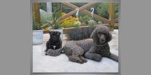 Domáce psy, obraz  je maľovaný ručne