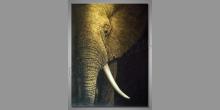 Elephant, obraz ručne maľovaný